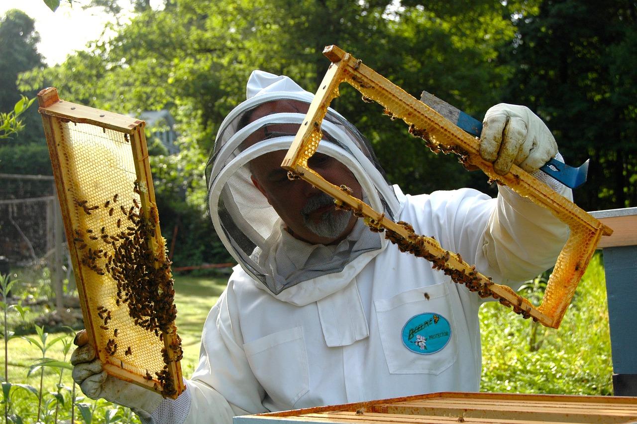 Rezultat slika za Pčelari zadovoljni prinosom meda